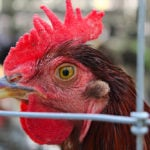 Herbruck Poultry Ranch, Inc. Pays $93,000 to Settle EEOC Harassment and Retaliation Suit